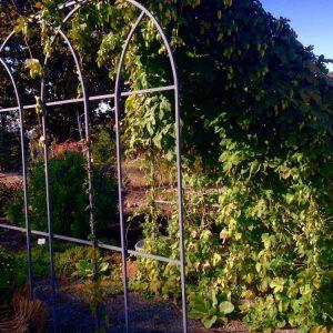 Medicinal-garden
