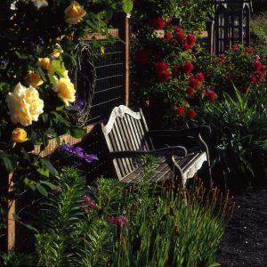 copy-of-rose-garden-bench