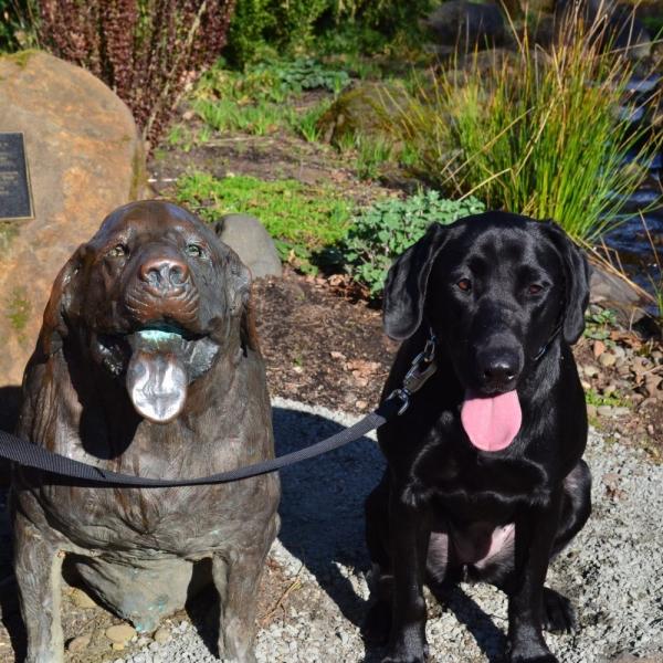 pet friendly garden the oregon garden