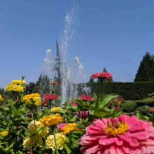 tog-gardens