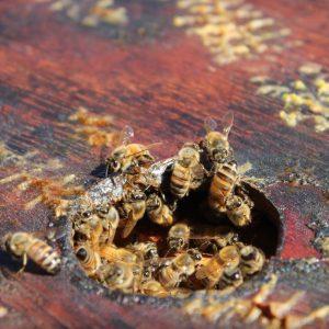 beeswebsite