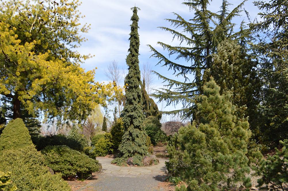 Conifer Garden at The Oregon Garden